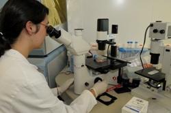 Observation au microscope inversé